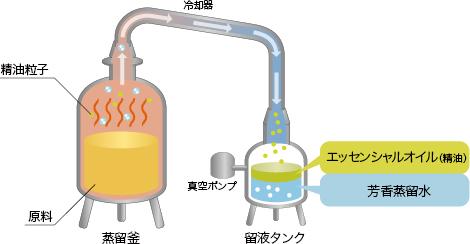 フルーツルーツのエッセンシャルオイル(精油)の製法