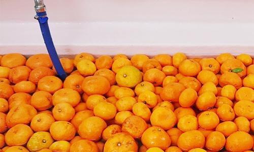 フルーツの洗浄