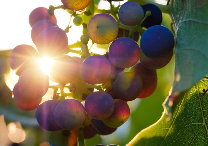 天然のフルーツやハーブの香りに包まれる時間
