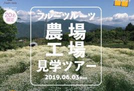 【イベント情報】フルーツルーツ2019農場見学ツアー開催